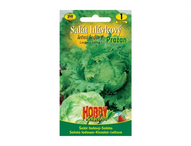 Salát hlávkový letní ledový PRAŽAN NG HOBBY GARDEN