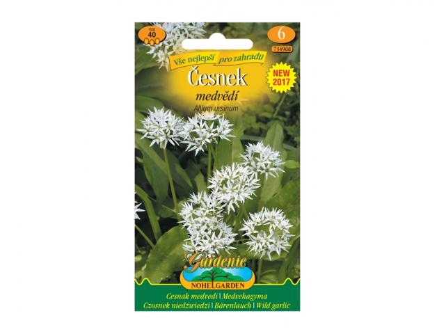 Allium ursinum/česnek medvědí/ NG GARDENIA