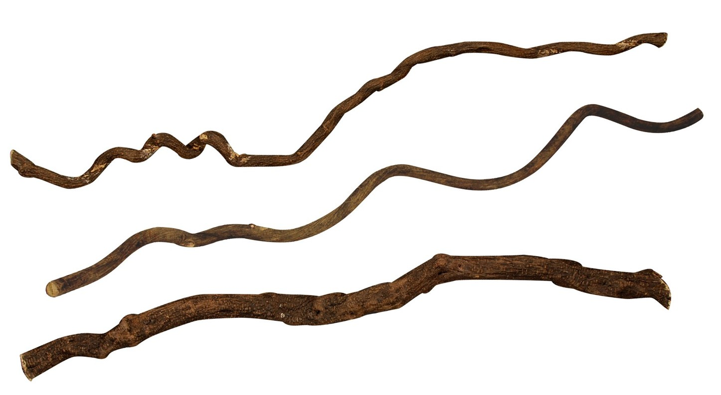 Asijské liány Lucky Reptile Medium cca 100 cm