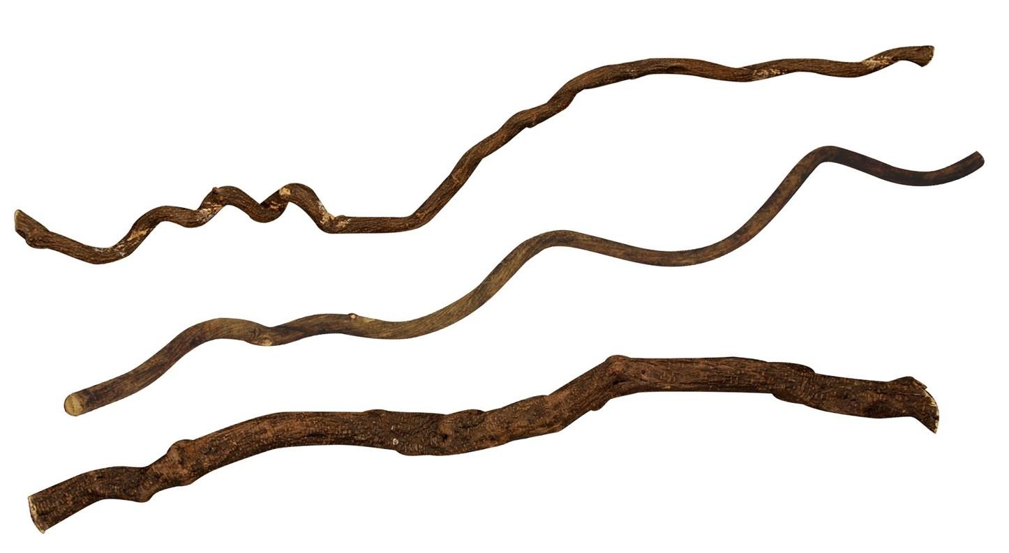 Asijské liány Lucky Reptile Tenká cca 100 cm