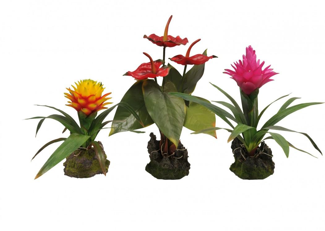 Kvetoucí Lucky Reptile Jungle Plants Bromélie Guzmania - červená, cca 35 cm