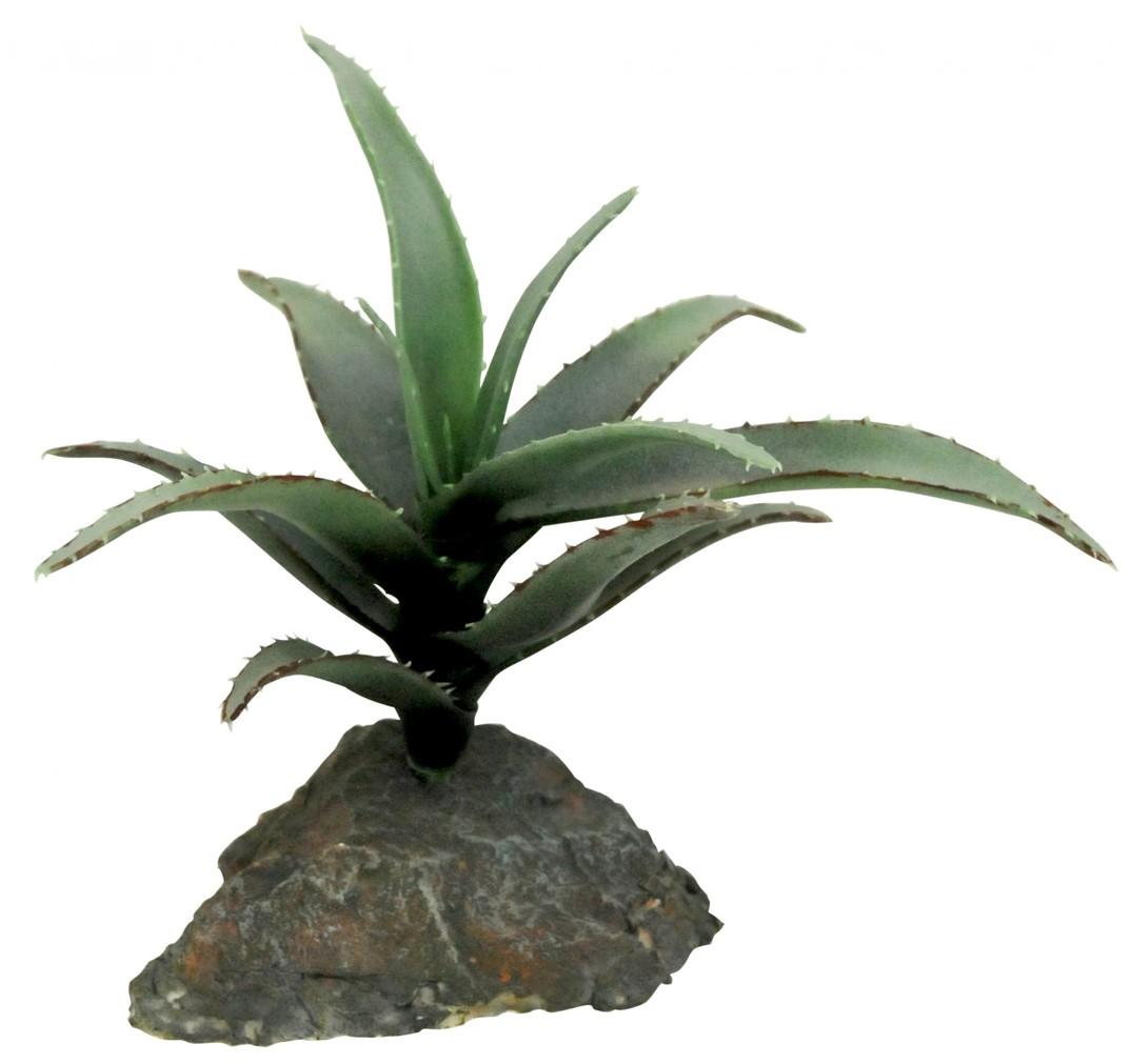 Sukulenty Lucky Reptile Cactus 3x, cca 15 cm