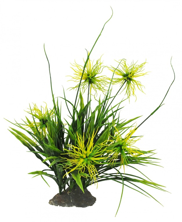 Trávy Lucky Reptile Borneo Grass, bílé květy cca 40 cm